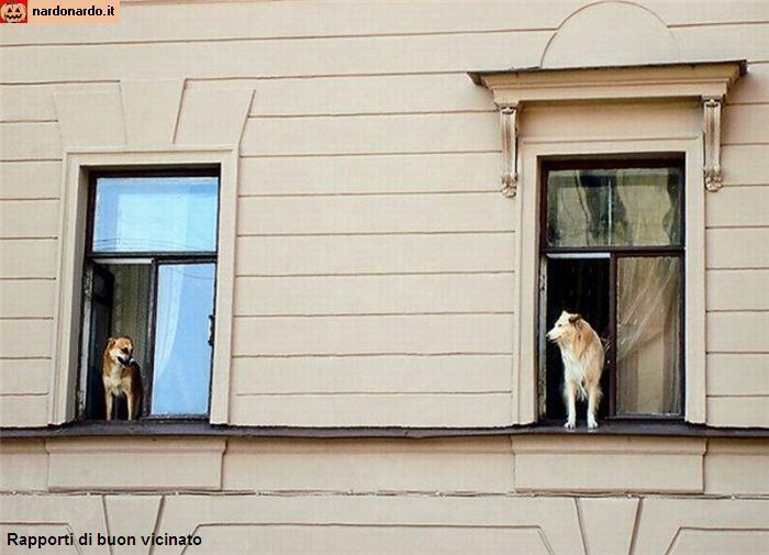 Rapporti di buon vicinato i vicini di casa sono simpatici - Vicini di casa rumorosi ...